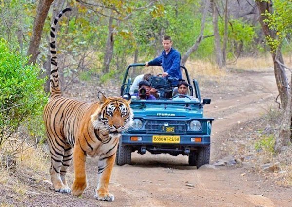 ranthambore-Tour Packages