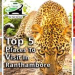 Top 5 Places To Visit in Ranthambore